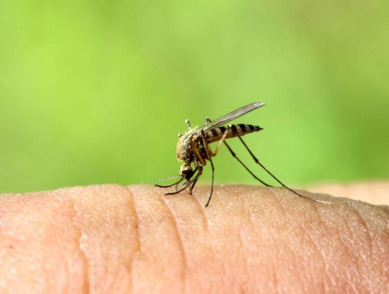 Dios ofrece sus más sinceras disculpas por haber creado el mosquito